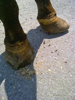 Cheyenne's back feet