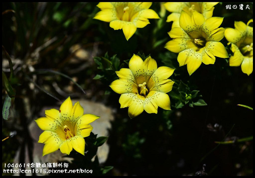 1040619合歡山攝影外拍DSC_1636