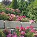 20150706_153752 Garden