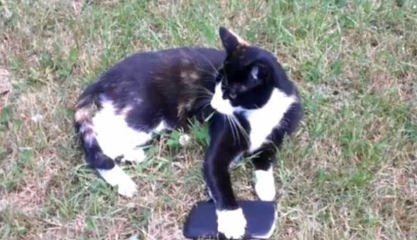 abbi-protective-cat
