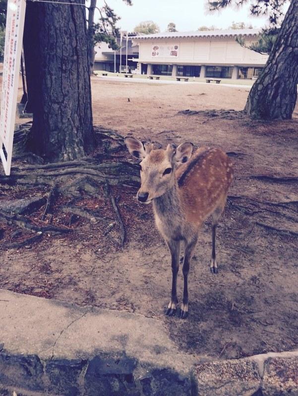 鹿 (9)