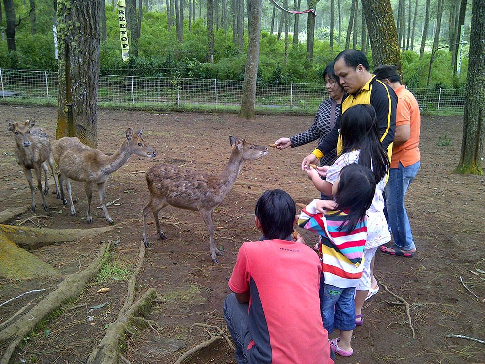 Grafika-Cikole-deer-feeding-via-celyngiselle