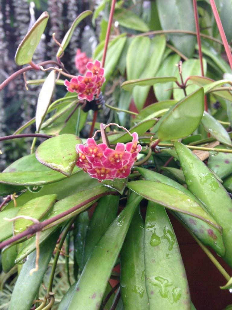 Orchidarium de Prangins 19121085129_6ed06d1ce6_b