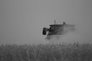 Throwing dust.