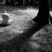 [film] silence
