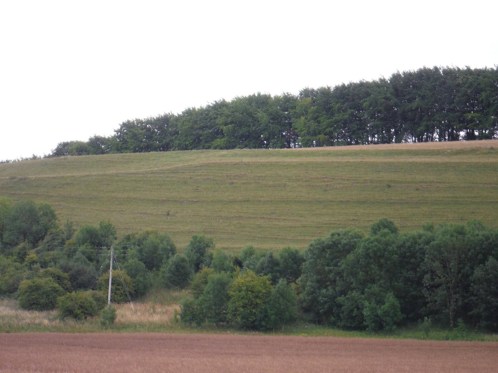 Strip Lynchets on Knighton Hill SWC Walk 254 Salisbury Circular