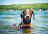 111 Piper the Otterdog by The_Little_GSP