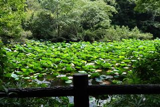 神宮裏・池
