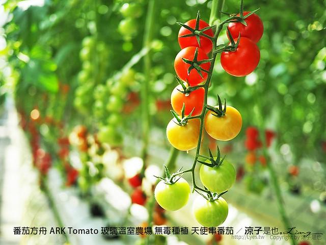 番茄方舟 ARK Tomato 玻璃溫室農場 無毒種植 天使串番茄 33