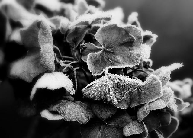 Die Blumen des Frühlings....