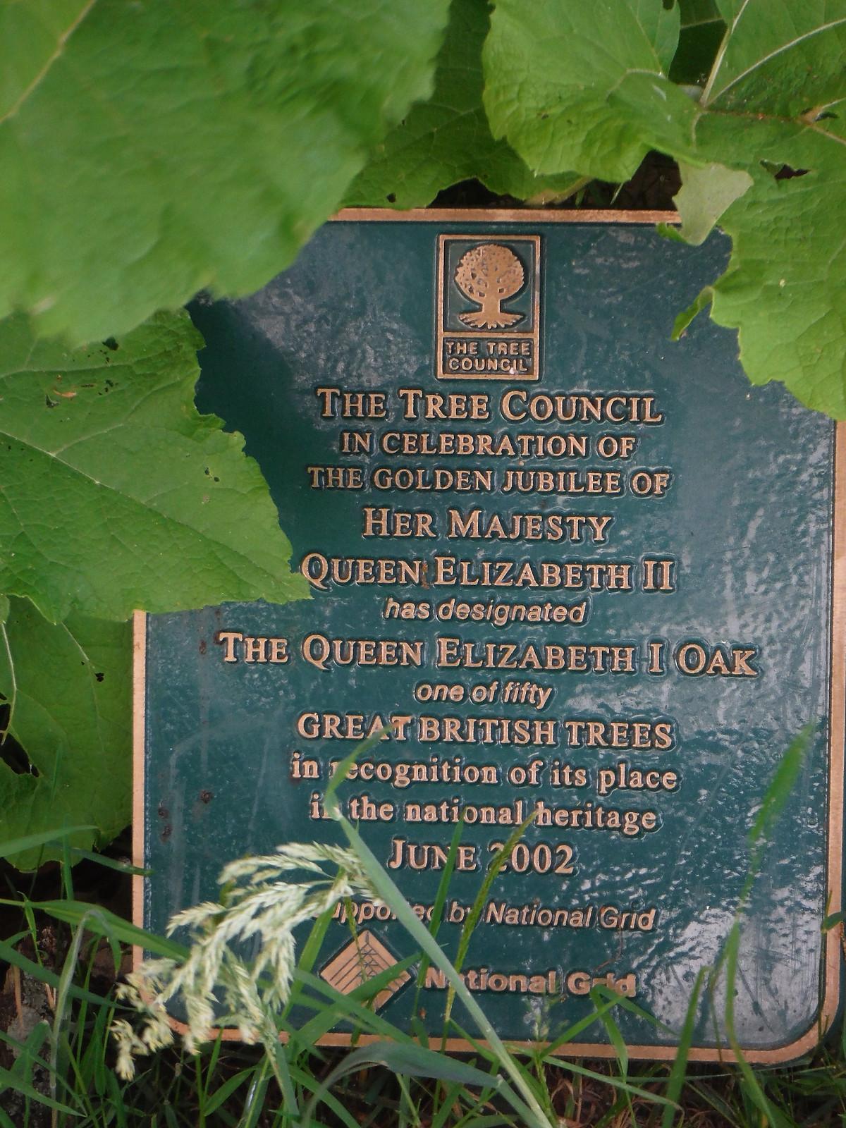 1000 year old Queen Elizabeth Oak SWC Walk 217 Midhurst Way: Arundel to Midhurst
