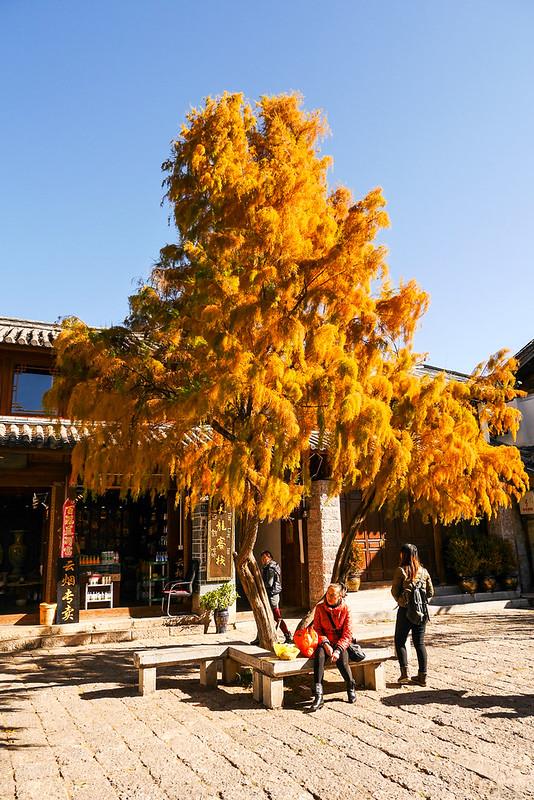 kunming_day7_52