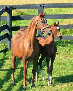 Christmas in New York and her 2015 weanling colt