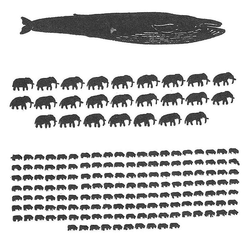 以重量來看,藍鯨、大象和牛的比較圖,1隻藍鯨約等於25隻大象、150隻牛。圖片來源:J.N. Tønnessen et al.,1982研究文章。