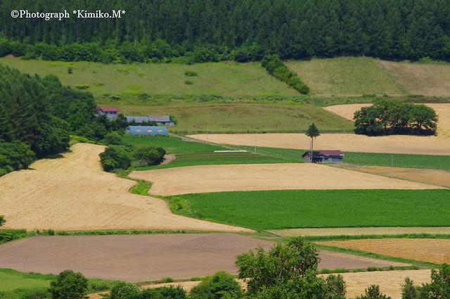 大麦の里1