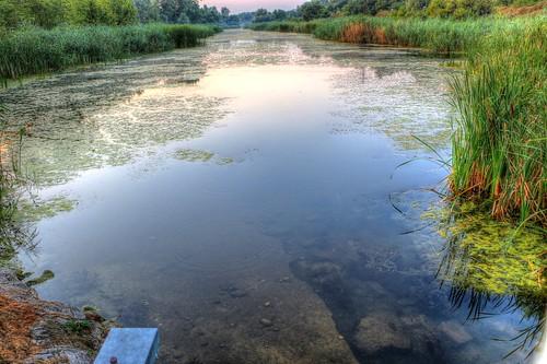 light sunset summer green reed nature water night digital canon river reeds eos budapest danube hdr alga 70d