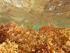 paisatge submarí - pel Cap Prim