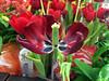 5ª Flowers... by GFerreiraJr ®