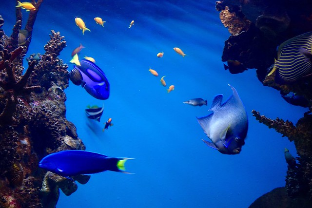 A trip to the Aquarium in Barcelona
