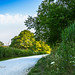 Flowery Trail 1