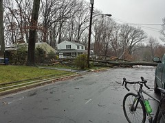 Tree Down, Power Out