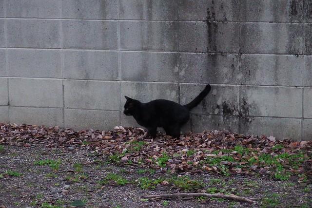 Today's Cat@2017-01-26