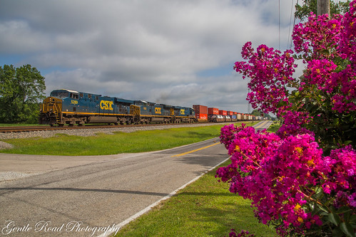 Crepe Myrtle's (and CSX) at Ardmore