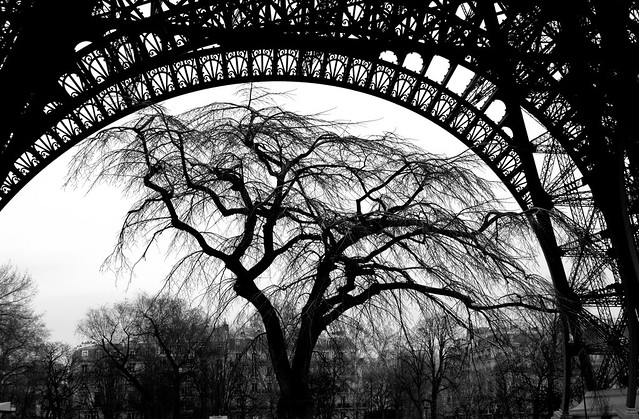 Tree under arch of Eiffel Tower