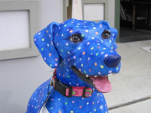 Dogma Pet Store Newport Beach Ca