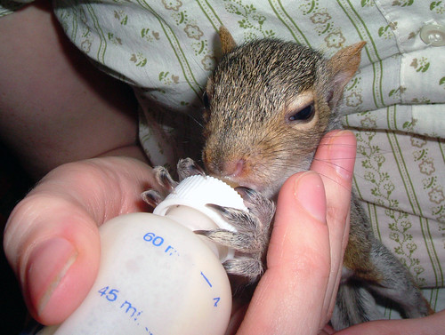 essay on my pet squirrel The all about squirrels site has a ton of squirrel article topics: the squirrel feeder, flying squirrel, ground squirrel, red and gray squirrel info, more.