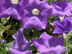 蒸溜所の庭に咲く花