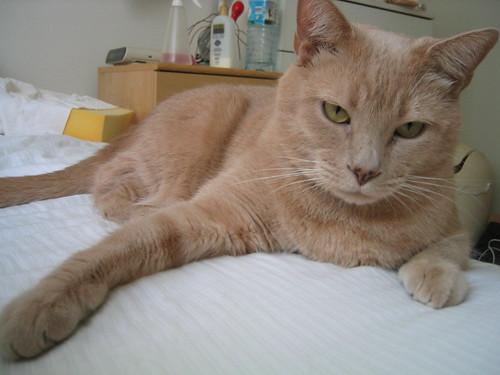 Cat IMG_0772.JPG
