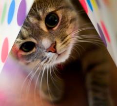 Cute cat alert!