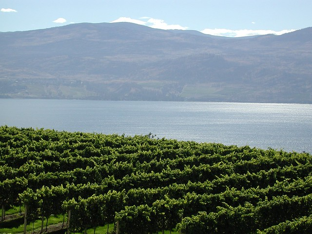 Lake Okanagan and Vineyards best bc wine