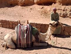ancient history(0.0), wadi(0.0), sand(1.0), temple(1.0), desert(1.0), landscape(1.0), camel(1.0), arabian camel(1.0), travel(1.0),
