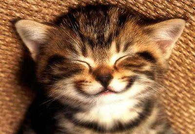 Smiling kitty