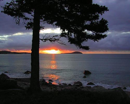 sunrise ocean tree novascotia saveme deleteme10