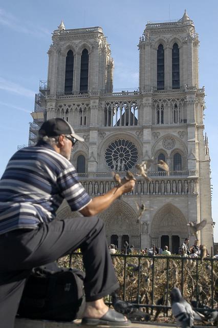 Attirer les moineaux flickr photo sharing - Comment effrayer les moineaux ...