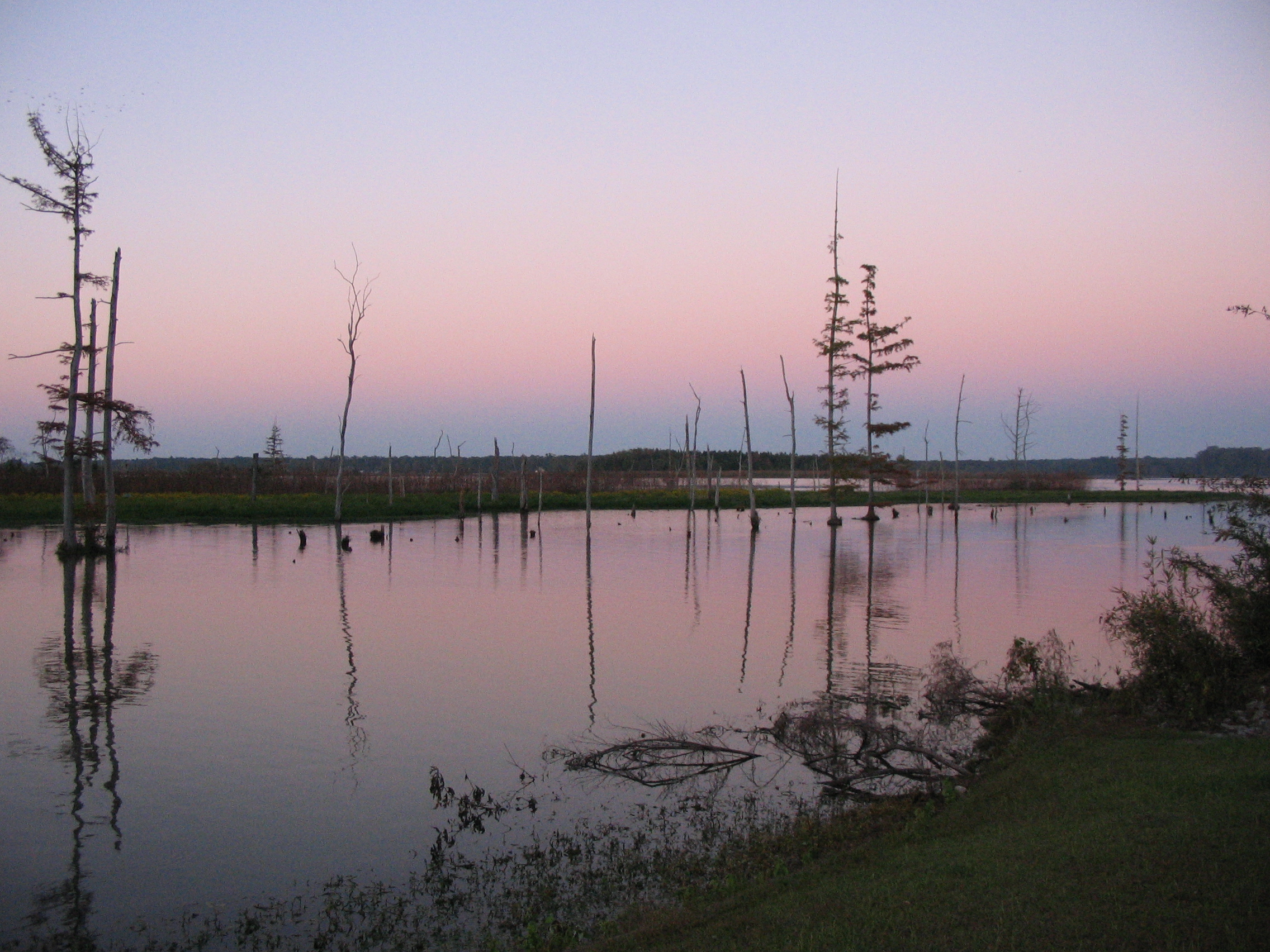 Mississippi monroe county amory - Trees Sunset Lake Color Colour Reflection Tree Water Colors Beautiful Grass Reflections Mississippi Twilight Colours Top20sunrisesunset