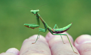 Mantis Magic Moment