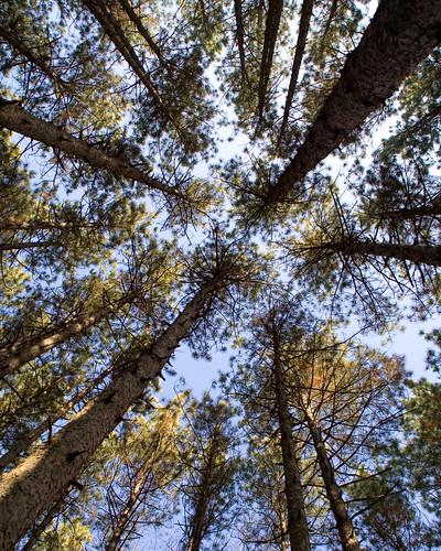park autumn ohio tree deleteme9 fall nature water forest savedbythedeletemegroup northwest saveme10 evergreen toledo tamron metropark oakopenings aprevit
