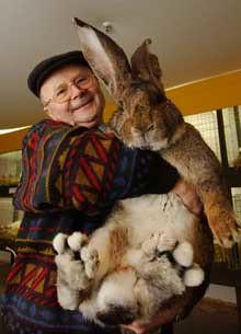 världens största kanin