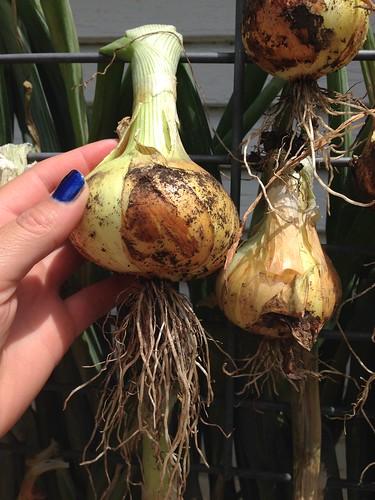 Onions!
