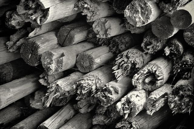IMG_5299 Wood Pile