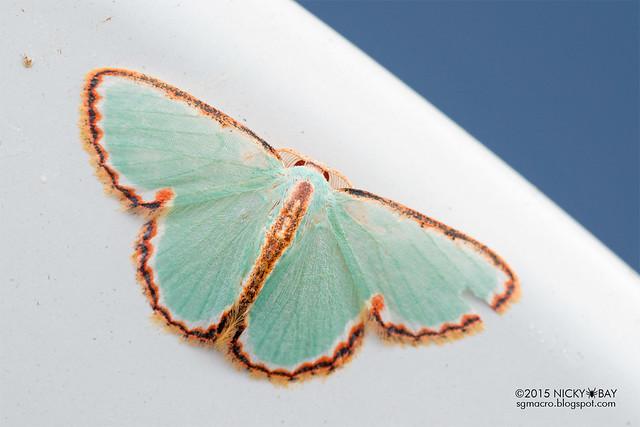 Moth - DSC_4718