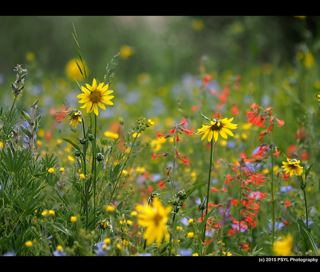Wildflower capital