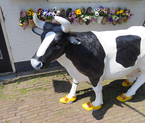 A Dairy Cow Wearing Wooden Shoes