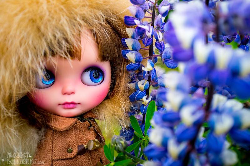 Nori in fields of purple