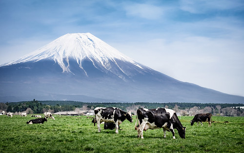 mountain japan cow fuji farm landmark jp fujisan fujifilm agriculture livestock shizuoka mtfuji domesticated asagiri shizuokaken xt1 fujinomiyashi