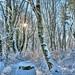 Snowy woods starburst - Day 12 / 365 by Wayne~Chadwick